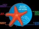 Figure 1. Mission Starfish 2030: Restore our Ocean and Waters. The five objectives of the Mission follow the five-arm structure of the beautiful marine invertebrate.